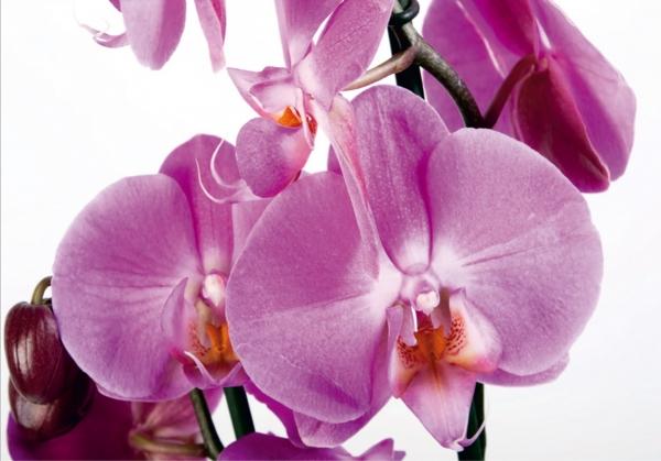 Fototapet Orhidee FTS 0049