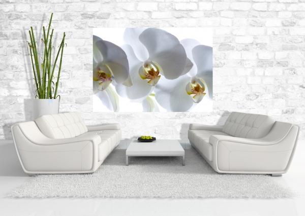 Fototapet Orhidee Albe FTSs 0832 1