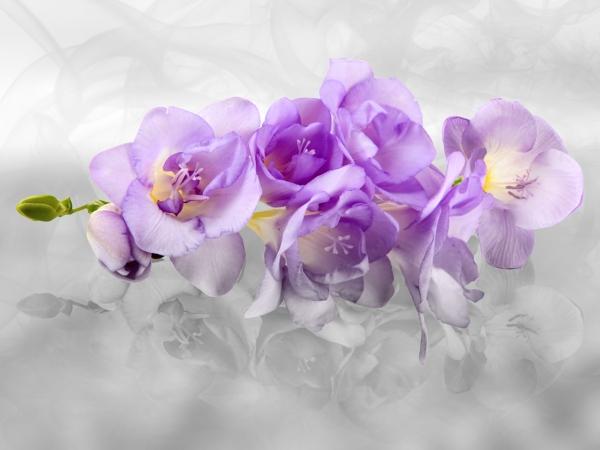 Fototapet Orhidee FTxxl 1440 0