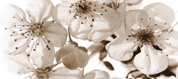 Fototapet Flori de Cires FTG 0906 0