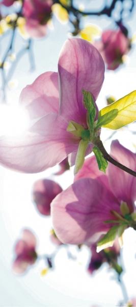Fototapet Magnolii 0