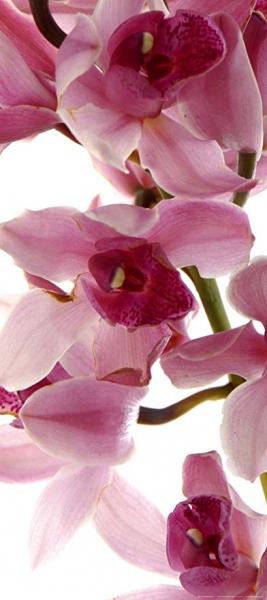 Fototapet Orhidee FTV 1514