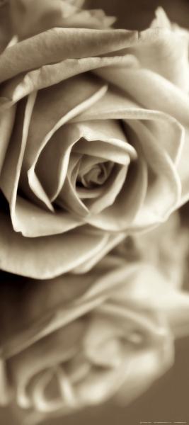 Fototapet Trandafir in Alb si Negru 0